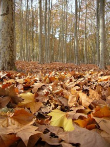 hojas secas...