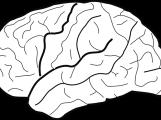 brain-305736_960_720